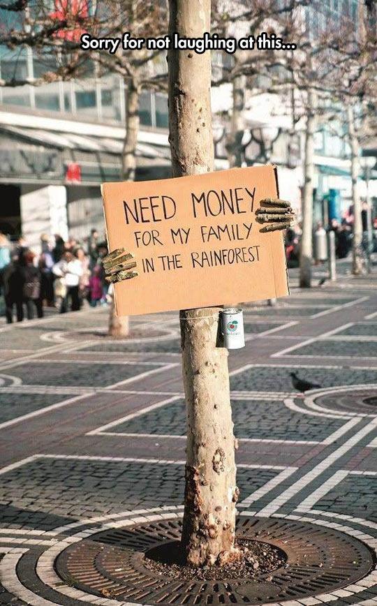 funny-tree-money-cardboard-sign