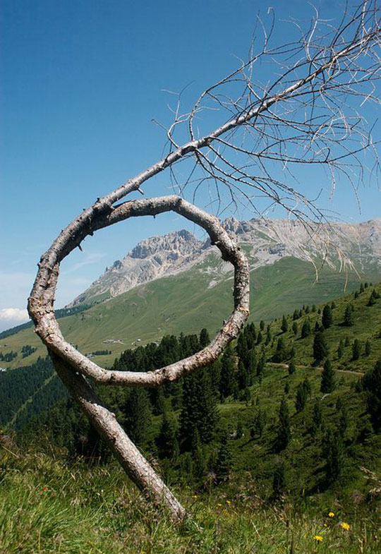 funny-twisted-tree-mountains