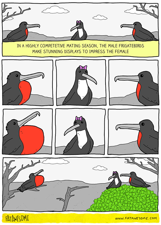 funny-webcomic-bird-mating-money