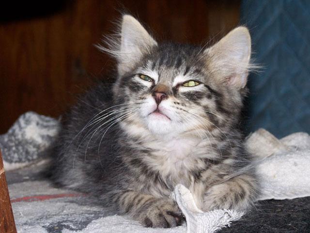 sneezing_cats_15