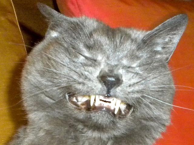 sneezing_cats_17