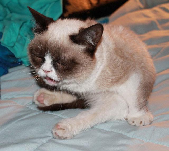 sneezing_cats_22