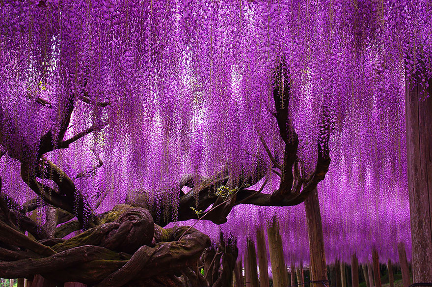 16 of the most magnificent trees in the World1