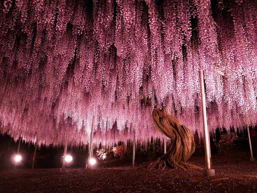 16 of the most magnificent trees in the World2