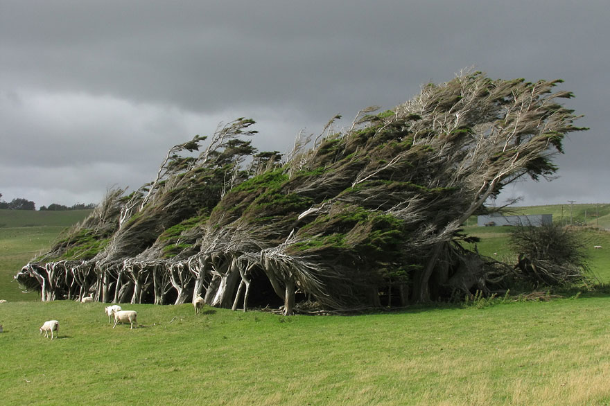 16 of the most magnificent trees in the World3