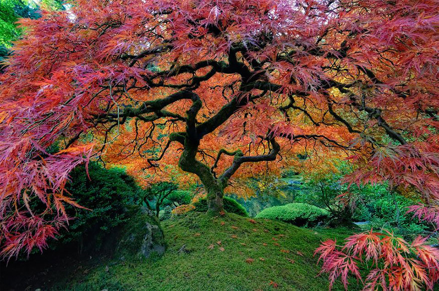 16 of the most magnificent trees in the World4