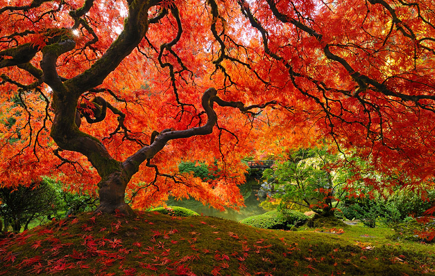 16 of the most magnificent trees in the World5