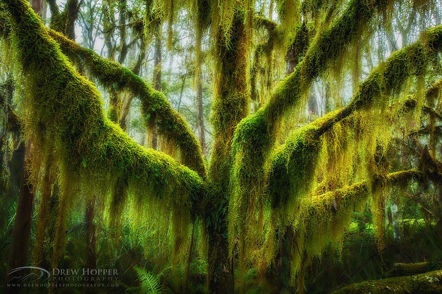 16 of the most magnificent trees in the World6