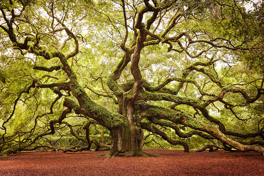 16 of the most magnificent trees in the World8