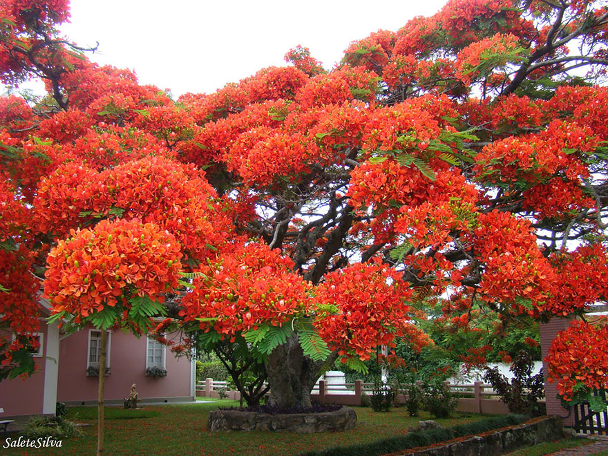 16 of the most magnificent trees in the World9