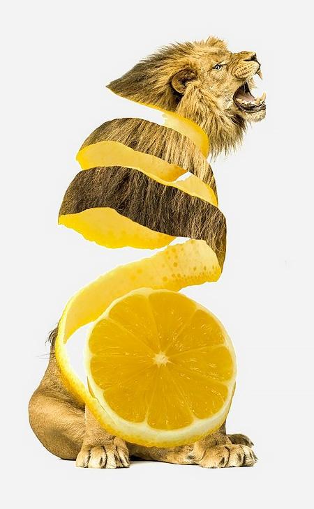 Animal Food Hybrids10