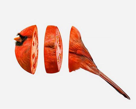 Animal Food Hybrids3