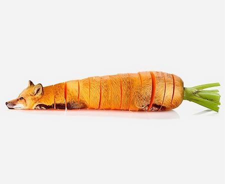 Animal Food Hybrids5