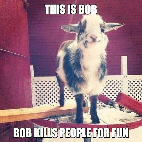 Bob Is Creepy