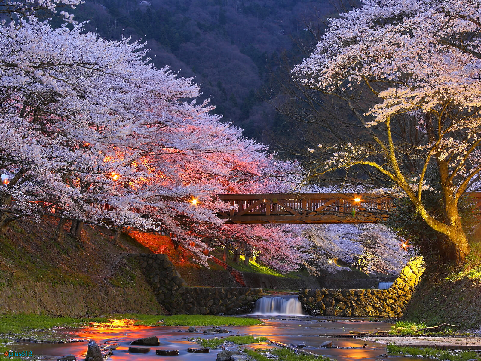 Cherry trees in Kyoto, Japan