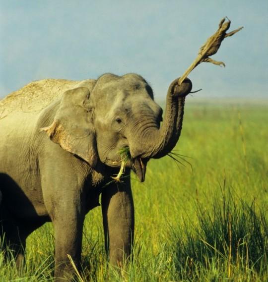 Elephants Are Jerks