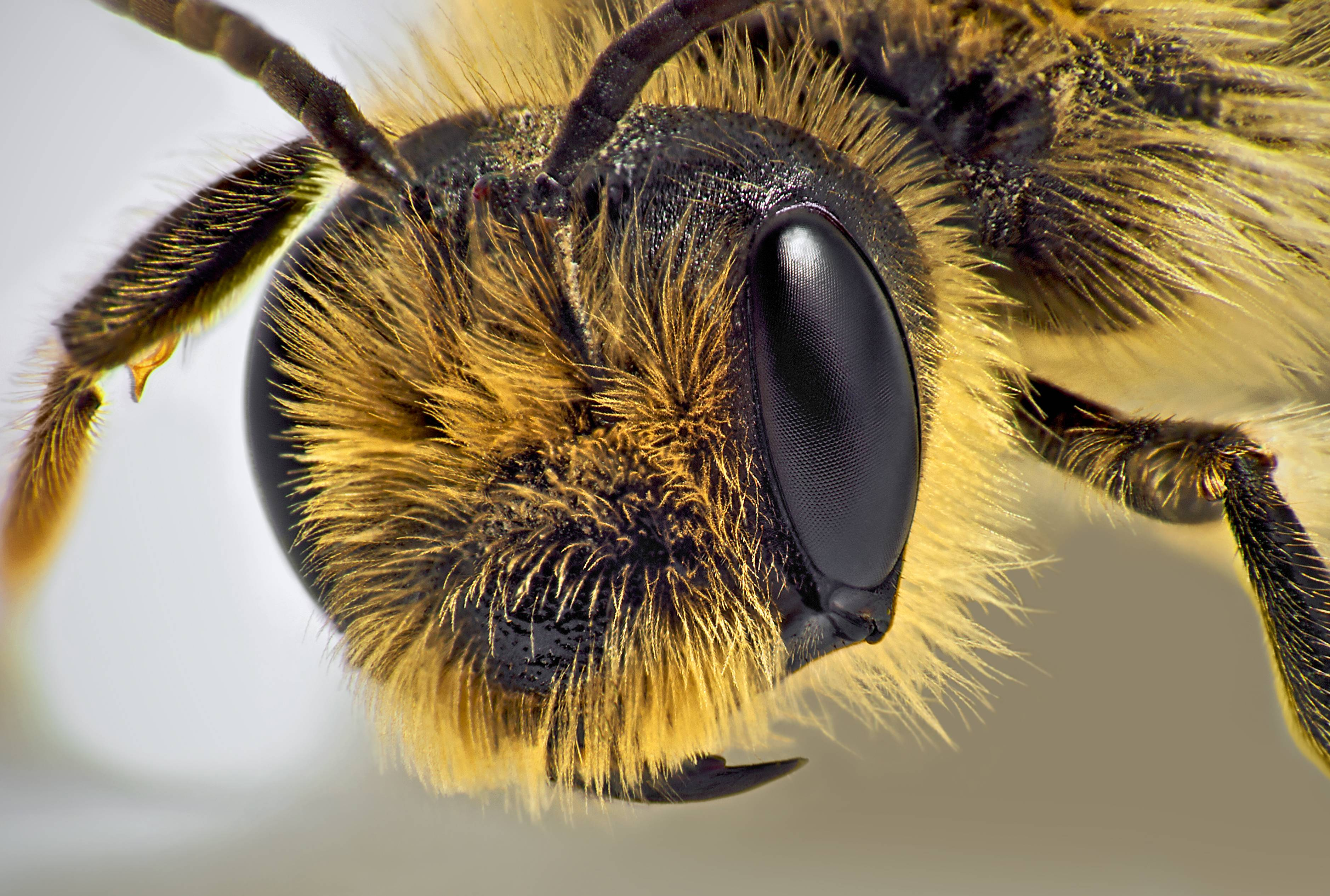 Let's take a moment to enjoy the cuteness of bees while they still exist.