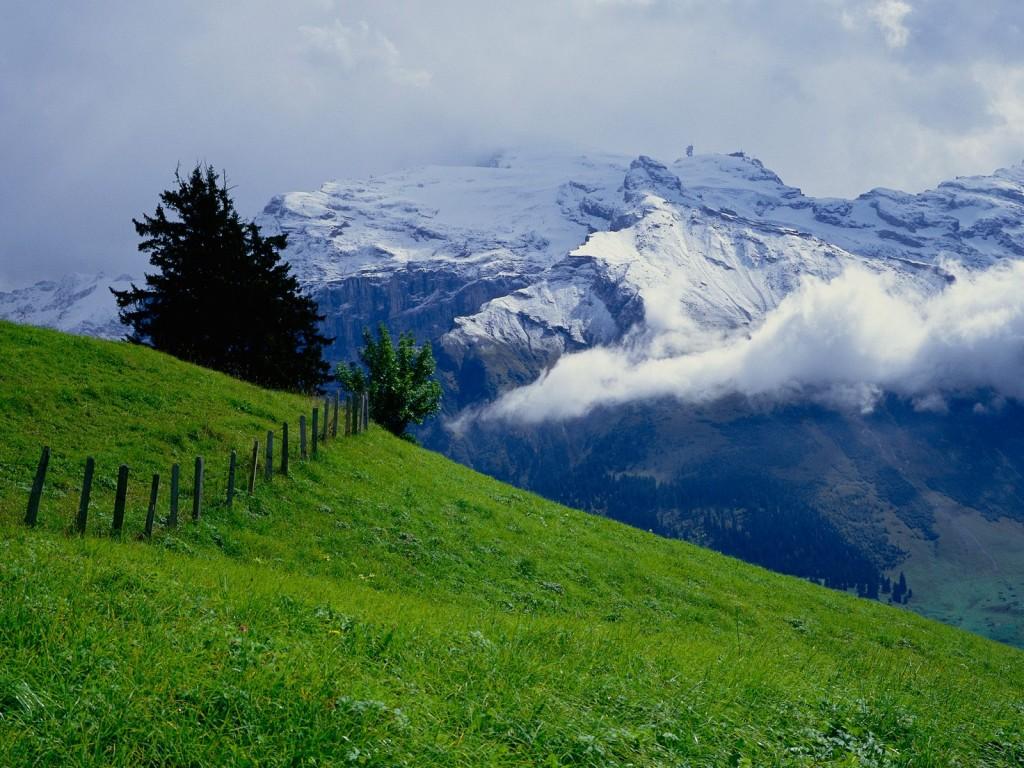 Meadow in Switzerland