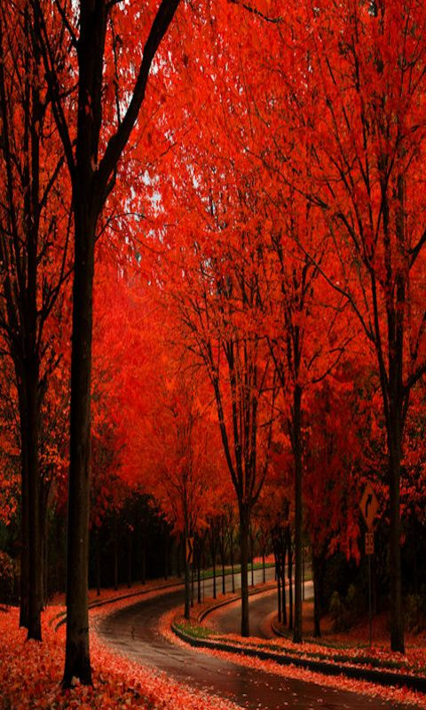 Red Forest in Sintra,Portugal