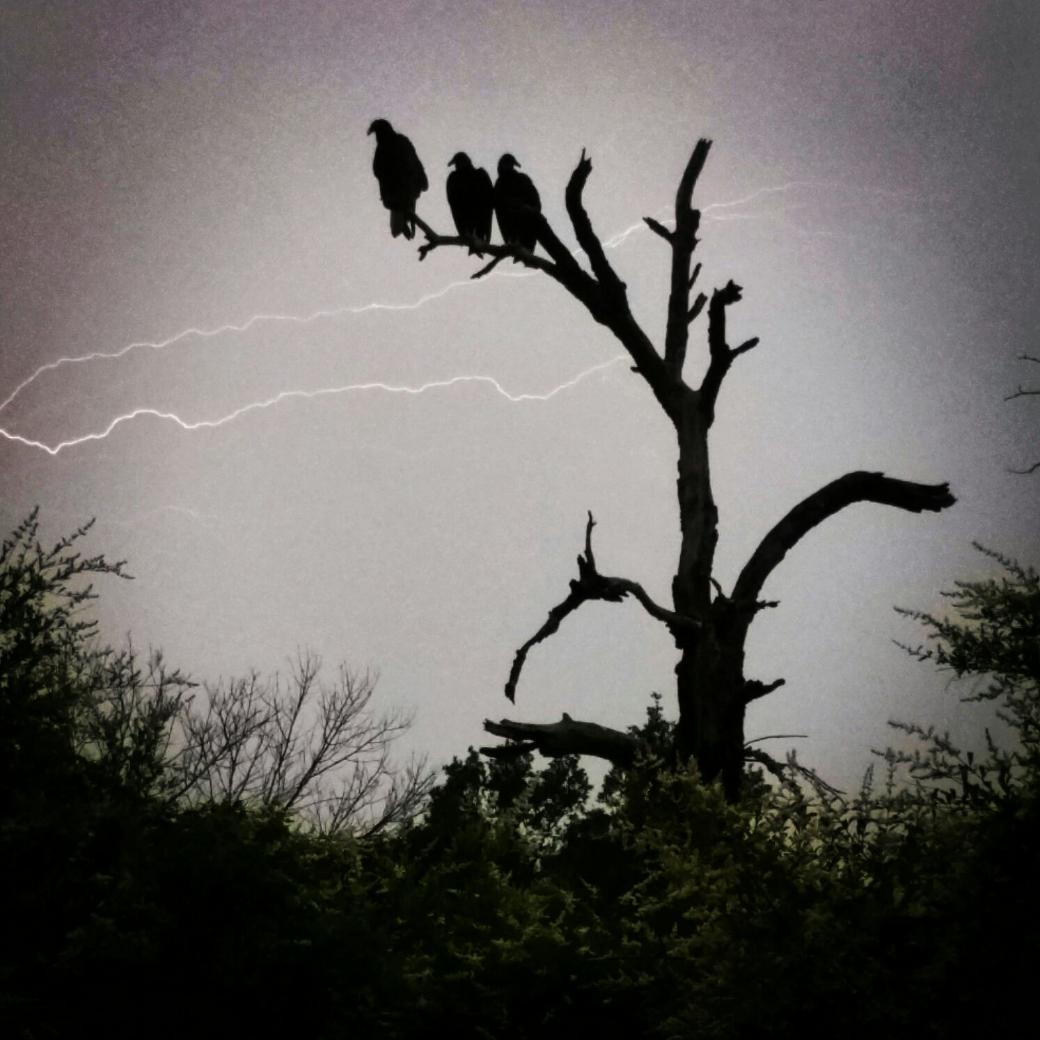 Snapped a rad photo of some ominous turkey vultures in Texas the other week!