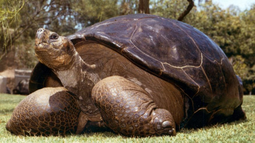 Speed the 150-year-old tortoise dies at San Diego Zoo. Speed has been living there since 1933.