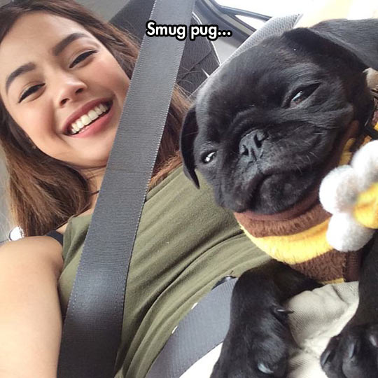 That Pug Is Going Places