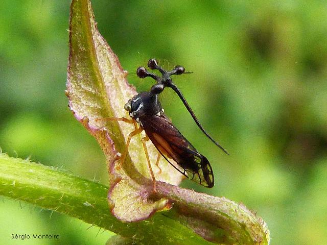 The Brazilian treehopper