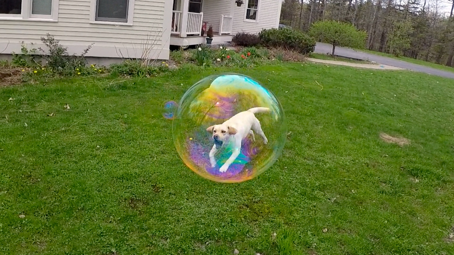 This freeze-frame trapped my dog in a bubble.