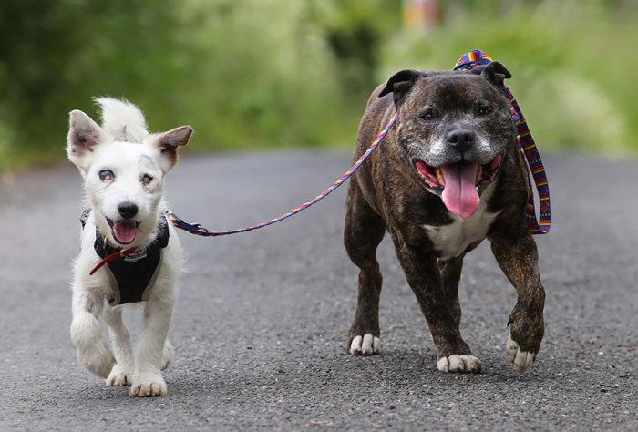 blind_dog_guide_best_friends_01