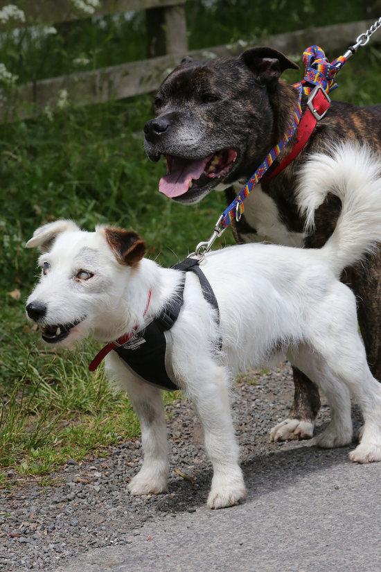blind_dog_guide_best_friends_03
