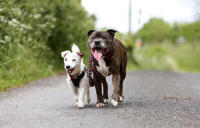 blind_dog_guide_best_friends_05