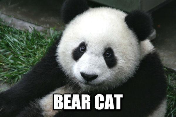 chinese-words-for-animals-translated-into-english-5