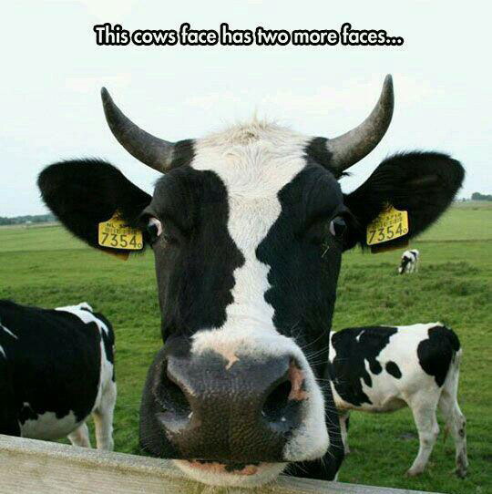 cool-cow-face-pattern-human