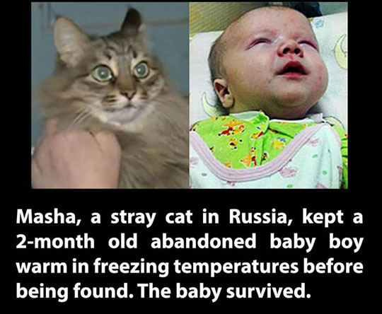 cool-hero-cat-baby-saved