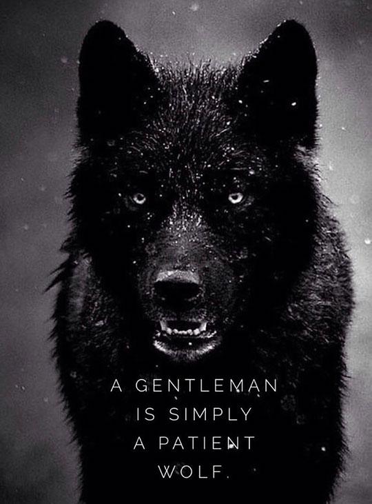 cool-quote-dark-wolf-gentleman