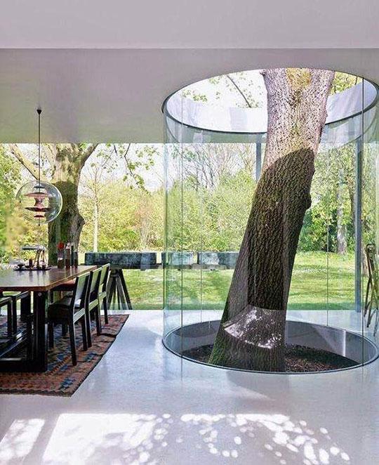 cool-tree-inside-house-design-glass