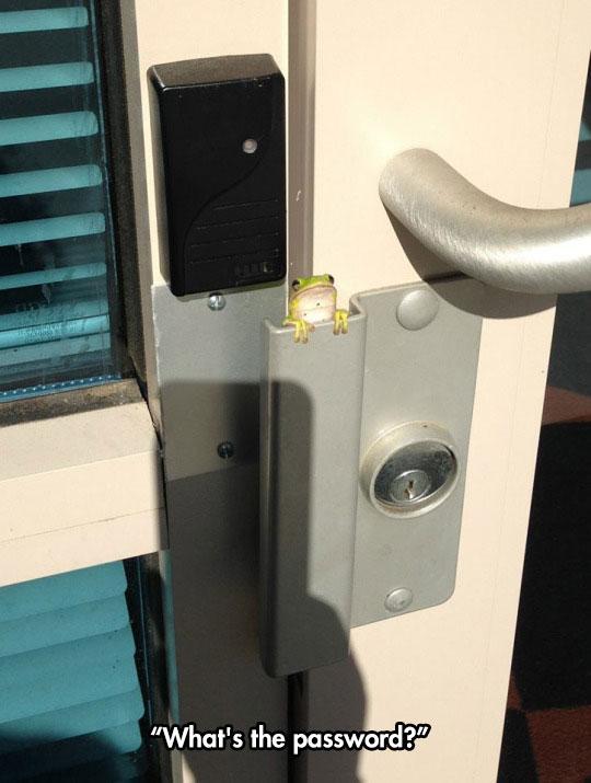 cute-frog-door-handle