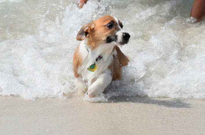 dog barely escaping a deadly wave