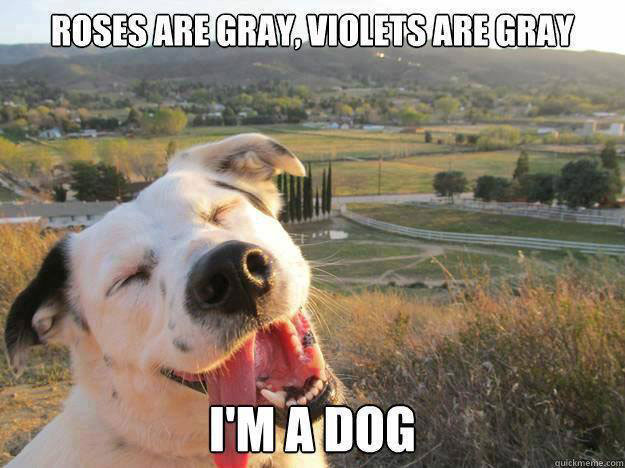 dog-poetry_20140409_1902012011