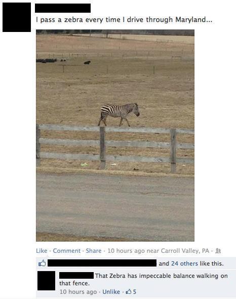 facebook-photos-zebra
