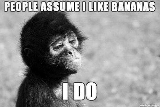 Self Reflecting Monkey
