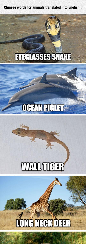 Chinese Animal Names