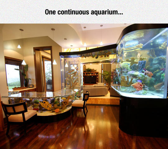 funny-aquarium-continuous-house-table