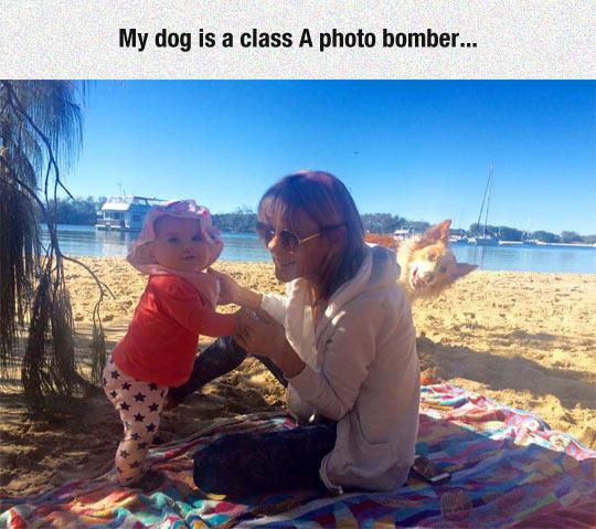 funny-baby-beach-dog-photobomb