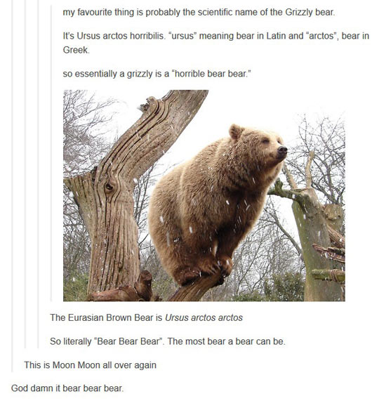 funny-bear-grizzly-tree-forest-climb