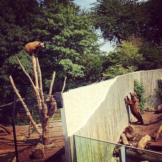 funny-bear-zoo-climb-tree-sad