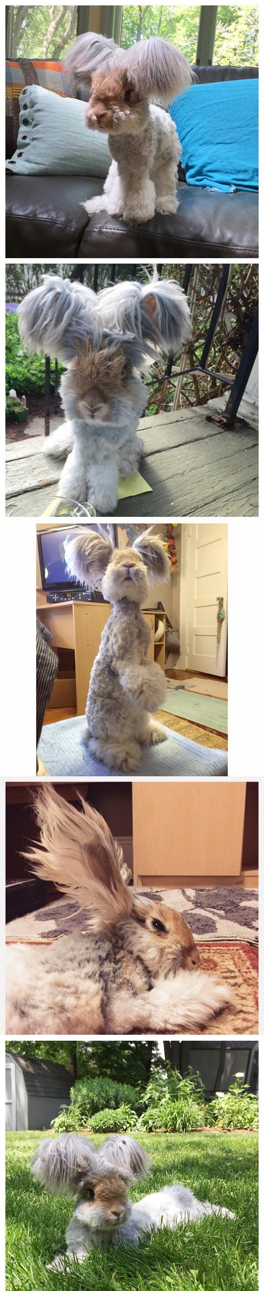 Meet Wally: The Angora Bunny