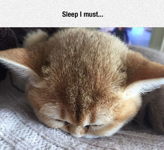 funny-cat-Yoda-alike-sleeping