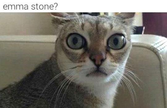 funny-cat-big-eyes-Emma-Stone