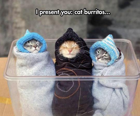 funny-cat-burritos-blanket-Winter